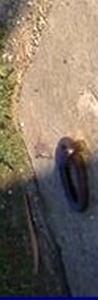 http://www.dieupentale.com/forum/uploads/2063_6_crepuscule_001copie.jpg