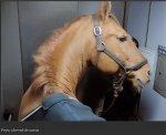 http://www.dieupentale.com/forum/uploads/thumbs/2063_peyo_cheval_de_coeur.png