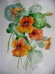 http://www.dieupentale.com/forum/uploads/thumbs/6_008_aquarelle_serie_florale_de_m-f_begue.jpg