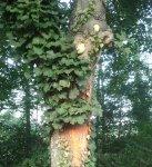 http://www.dieupentale.com/forum/uploads/thumbs/6_2010-10-18_092350.jpg